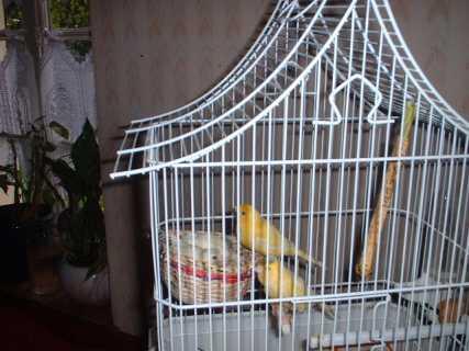 Topic ornithologique ! ♥ Hartz1